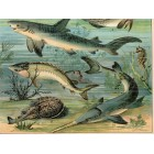 Fish, eel, carp, crucian, herring, sturgeon (21) lithography 1880