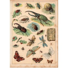 Beetle, butterfly, ant, dragonfly (22) lithography 1880