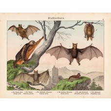 Bats, lithography 1886