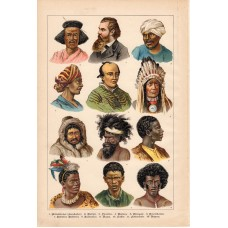 Human species, ethnography, lithography 1886