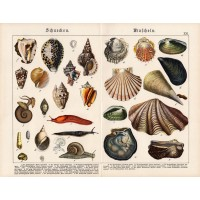 Snails and shellfish, lithography 1890