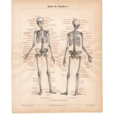 Skeleton I, lithography 1888
