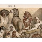 Dogs, lithography 1888
