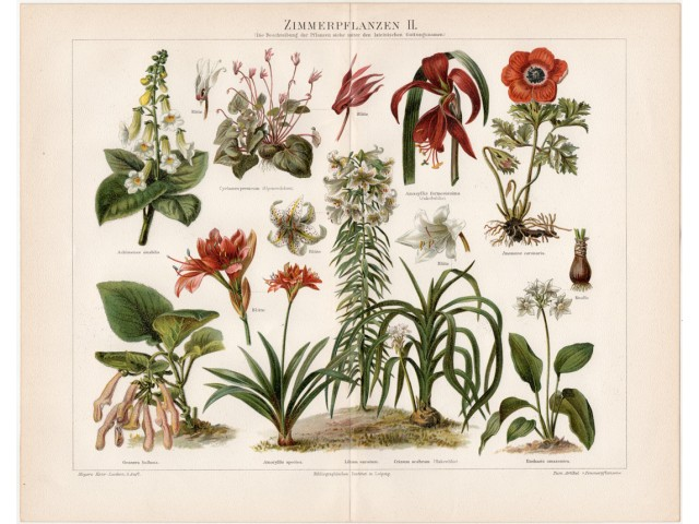 House plants II., lithography 1898