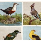 Birds - penduline, sitta and golden oriole, waxwing, swallow, lithography 1885