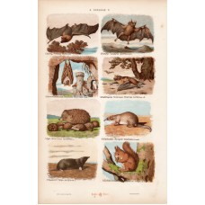 Bat, squirrel, urchin and monkey, gorilla, lithography 1885