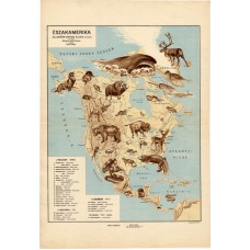 North America zoogeographical map 1928
